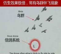 画像『「鳥」ドローンで中国全土を監視計画』/  South China Morning Post - 『つかさ組!』