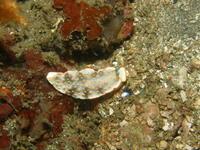 2012.09 伊豆山 The 2nd Dive - ランゲルハンス島の海