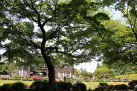 旧古河庭園の庭園内を散策3 - Let's Enjoy Everyday!