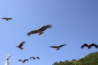 鳥と戯れる伊根町船屋の里 - 京都ときどき沖縄ところにより気まぐれ