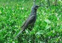 25 ヒヨドリ - 荒川区百景、再発見
