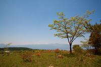 岡谷市 高ボッチ高原のツツジと青空 その1 - 日本あちこち撮り歩記