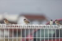 集い - ほぼ週刊…Photolog