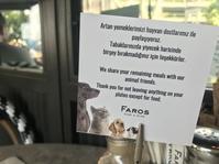 猫に優しいイスタンブール - カッパドキアのデイジーオヤ刺繍ショップ店長日記