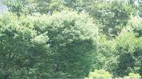 朝の会話 - hibariの巣