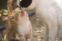 大好きなお母しゃん - ネコと裏山日記