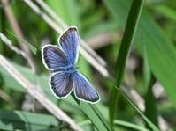 2018年6月下旬 群馬県&栃木県 蝶いろいろ - 春ちゃんのメモ蝶3