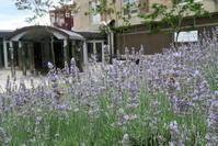 飛蚊症・後部硝子体剥離後の定期検査、ペルージャ 2018年夏 - イタリア写真草子 Fotoblog da Perugia