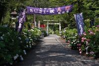 栃木市紫陽花の撮影会 in 大平山 - 日々の贈り物(私の宇都宮生活)