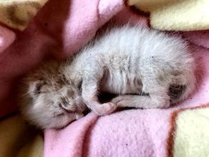 育児放棄された赤ちゃん猫 - ありふれた日々の積みかさね