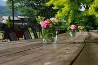 Table Flower - フォトな日々
