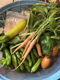 納屋Cafeに野菜も届いたよ!「家庭菜園でできた無農薬の新鮮野菜」編 - 納屋Cafe 岡山