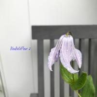 雨の日のクレマチス - Bleu Belle Fleur☆ブルーベルフルール