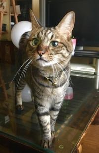 宇宙との交信!トラちゃんの7月占い - 猫丸ねずみの大荒れトーク