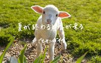 ニュージーランドまで往復¥89000/ Come and Enjoy Kiwi Spring in Your Fall - アメリカからニュージーランドへ