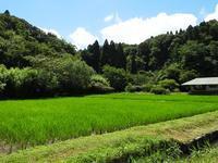 田に現れる生きものたち - 千葉県いすみ環境と文化のさとセンター