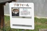 もふてく☆ゴールデンパン祭り2018西山編・その4 - レッサーパンダ☆もふてく放浪記