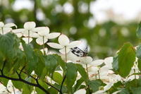箱根 雨の中の植物観察会 - じいじとばあばのフォトライフ