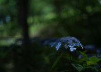 森の中 - ぽとすのくずかご