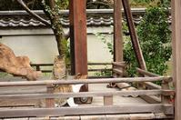 2018,3,20 京都御苑 その1 - 死すべきキモオタ~或いは怠惰な脂肪の塊~