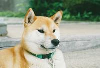 久安寺のワンコ - photomo