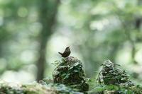 森の住人・・! - さすらいの写遊人