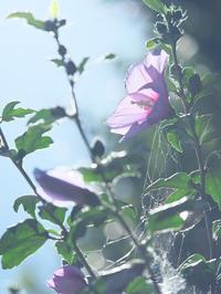 梅雨明け宣言 - 節操のない写真館