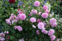 バラの香り - バラとハーブのある暮らし Salon de Roses