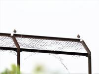 似合わない止まり木 - 綺麗な野鳥たち