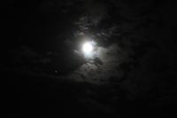 月夜に思い出したこと徒然 - 長女Yのつれづれ記