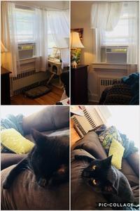 エアコンはじめました - にゃんこと暮らす・アメリカ・アパート(その2)