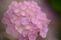 卯辰山にて紫陽花 - 今日の空+α2