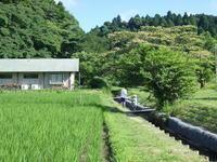 7月になりました。 - 千葉県いすみ環境と文化のさとセンター