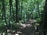 ダイアリー 7月1日の墓参り - 散歩ガイド