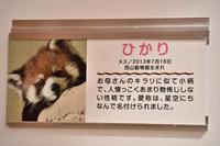 もふてく☆ゴールデンパン祭り2018西山編・その5 - レッサーパンダ☆もふてく放浪記