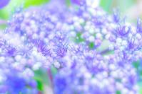 Bonjour Juillet - Une fleur