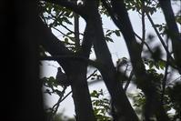借景の木々にやってくる鳥とガラスごしのお遊び、、、、 - 生きる歓び Plaisir de Vivre。人生はつらし、されど愉しく美しく