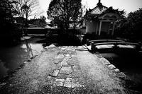 妙心寺(みょうしんじ)散歩写真 - 牛の散歩写真・関西版