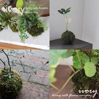 『 IVORY 花教室  7月  開催です〜♬』 -  Flower and cafe 花空間 ivory (アイボリー)