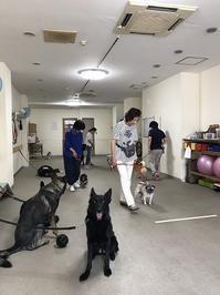 6月のグループレッスン~水曜日組~ - kleiner heine