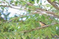 幼鳥とがさちゃん - 心 色