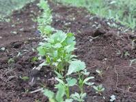 7月になりました。 - 南阿蘇 手づくり農園 菜の風