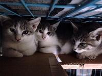 『わが愛しのこねこ写真展』その1 - 湘南藤沢 猫ものの店と小さなギャラリー  山猫屋