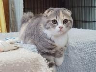 『わが愛しのこねこ写真展』その2 - 湘南藤沢 猫ものの店と小さなギャラリー  山猫屋