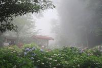 芦ノ湖西側稜線コースを歩くその1 - 季節(いま)を求めて