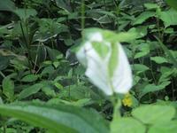 花はいつかは咲く       7月2日(月) - 雲居