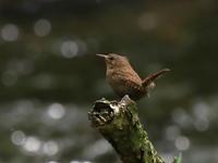 高原シリーズ第二弾 - 『彩の国ピンボケ野鳥写真館』