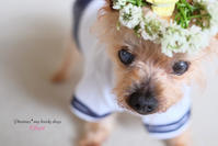 DOG PHOTO#136: 憧れの花かんむり。 - Precious*恋するカメラ