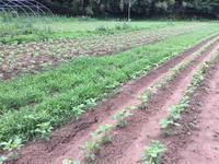 大豆畑の干渉地帯 - 自然栽培 果樹カナン
