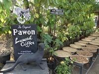 ジャコウネコのウンチコーヒー、コピ・ルワックを飲みました - kimcafeのB級グルメ旅